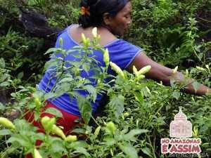 Mulheres indígenas comandam as roças