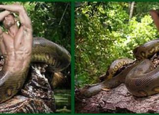 Lenda da cobra Honorato (Norato) e Cobra Maria Caninana