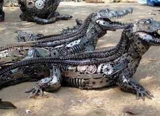 Jacarés robôs ajudarão na segurança da Praia da Ponta Negra