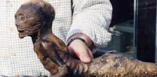 Criatura esquisita é encontrada no interior do Amazonas