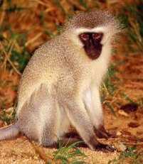 FEVEREIRO - Signo de Macaco