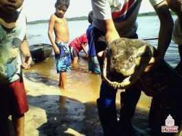 Ribeirinhos de uma comunidade do Miriti, localizada no município de Barcelos, no Amazonas, dizem ter encontrado uma cobra (sucuri) nesta semana.