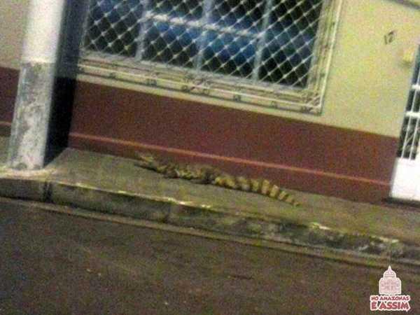 Após quase morrer afogado de tanta chuva, animal resolveu passear pelas ruas.