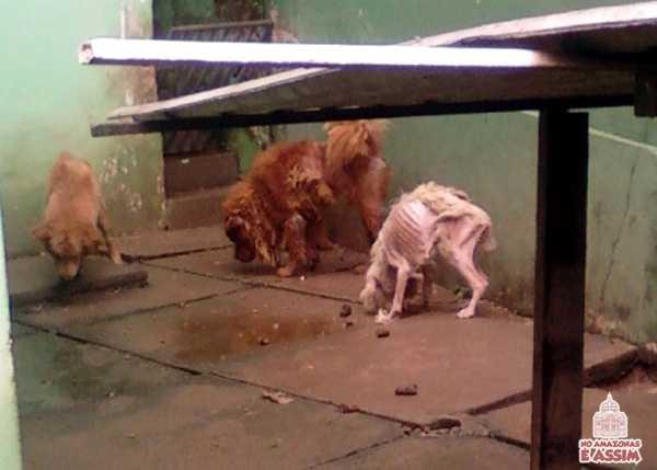 O SEU SILÊNCIO É TUDO QUE UM CRIMINOSO PRECISA PARA CONTINUAR MALTRATANDO ANIMAIS. DENUNCIE AGORA!