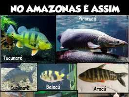 peixes amazônicos