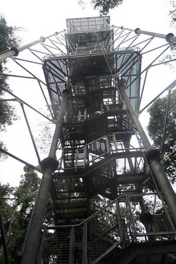 Museu da Amazônia libera acesso à torre de observação  Fotos: Vanessa Gama, Rubenaldo Ferreira e Lucas Reis