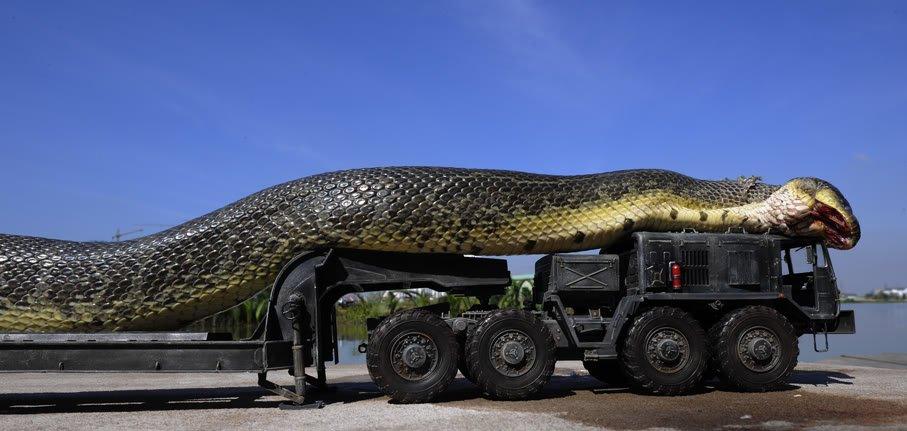 A maior cobra do mundo ja capturada pelo exercito (4)