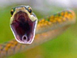 Sonhar com Cobra