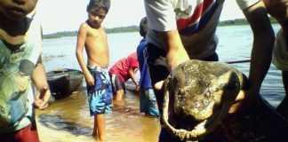 A lenda da cobra grande é verdadeira / Divulgação