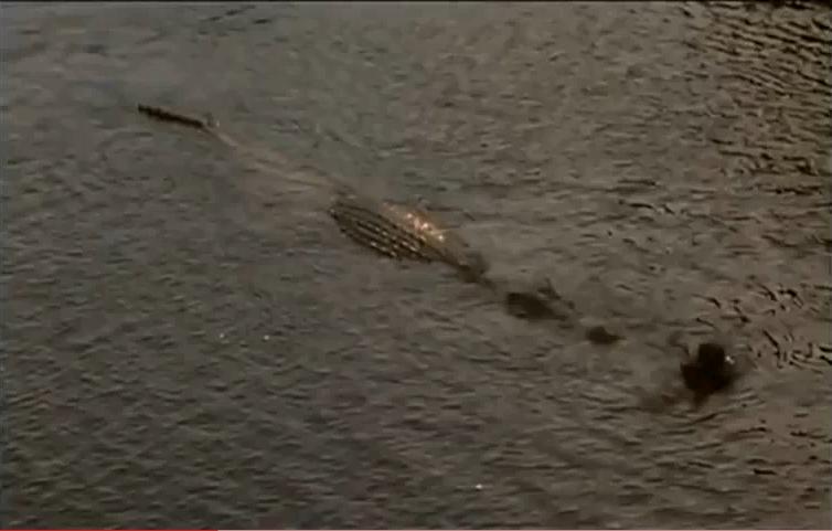 Cena do filme Pânico no Lago