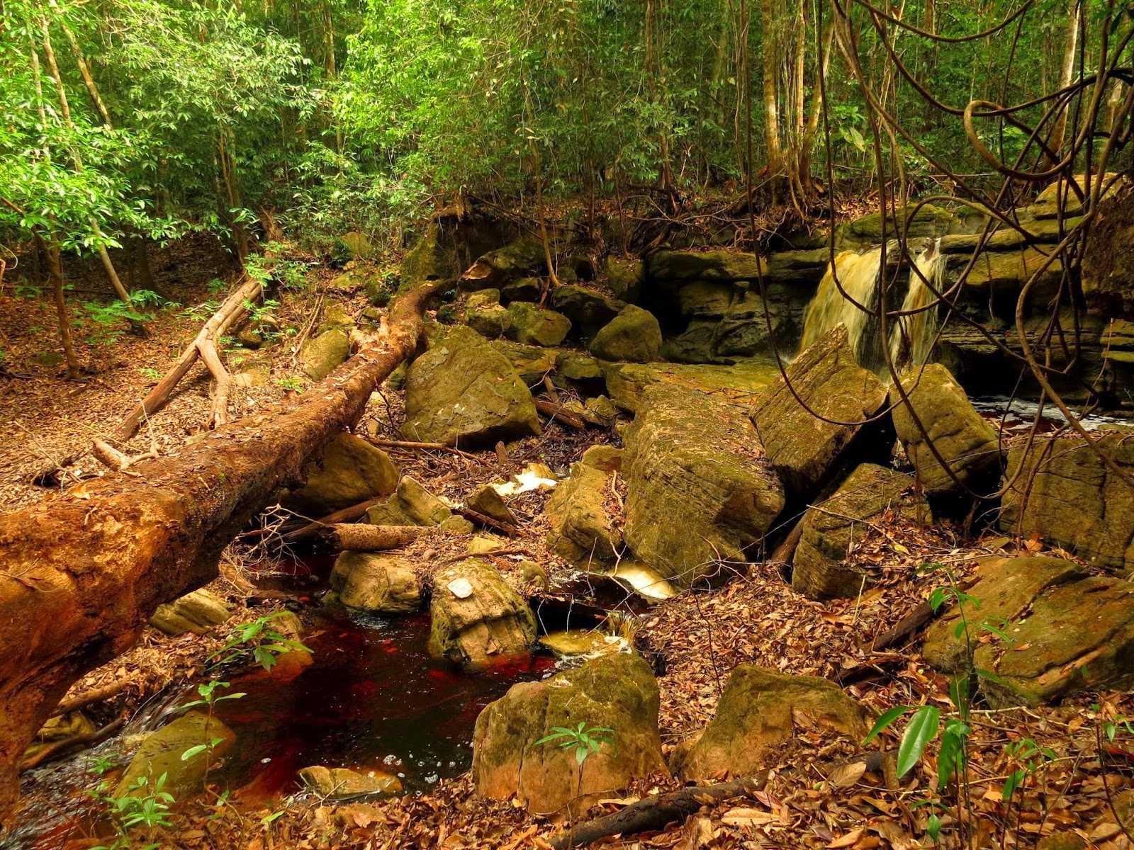Conheça a Cachoeira do São Domingo / Foto : André Maués