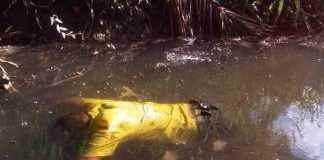 Homem é encontrado às margens de igarapé em Manaus
