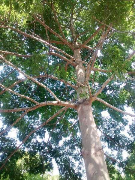 Foto: Movimento Não cortem as árvores do campus