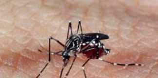 Sobe o Nº de casos notificados de Zika vírus em Manaus