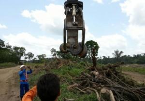 A maior cobra do mundo é capturada no Brasil e deverá ir para o Guiness