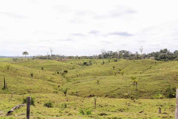 Destruição da floresta amazônica próximo ao rio fervente