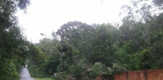 Arvore caída na avenida do Cetur no Tarumã - Foto: Mônica Prestes