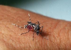 Paciente foi infectado com o zika vírus através de uma relação sexual