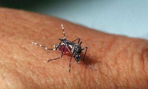 zika vírus através de uma relação sexual.