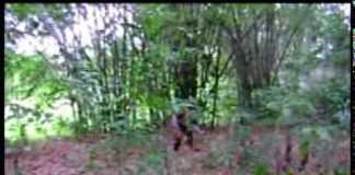 """Aparição """"Mapinguari"""" ou """"Jurupari"""" assusta moradores do interior do Amazonas"""