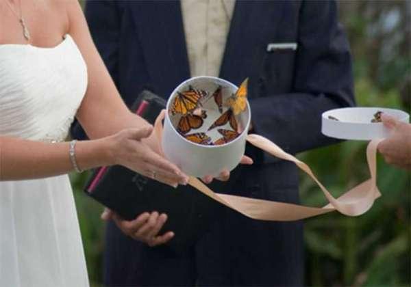 Borboletas são congeladas para serem jogadas em cerimônias de casamentos
