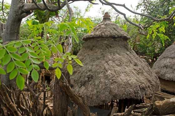 Entre as cabanas dos habitantes Konso, uma constante: as árvores de moringa, cujas folhas fornecem alimento todos os dias do ano (Foto: © Haroldo Castro/Época)