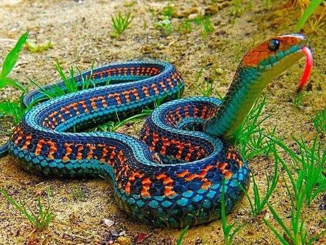 Você vai se surpreender com algumas curiosidades sobre as cobras