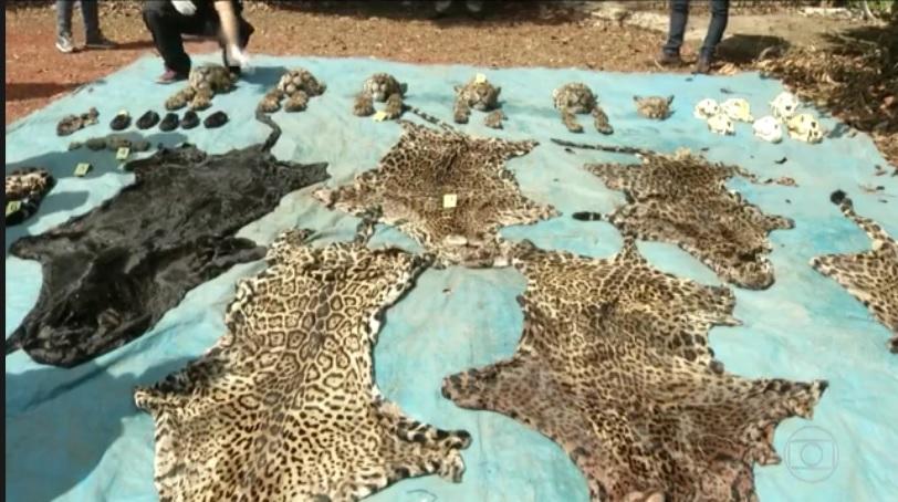 Matança de onças e outros animais, que chocou a população do sudeste do Pará, é considerada pelo Ibama a maior caça ilegal de grandes felinos já registada desde a criação do Instituto