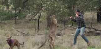 Conheca a historia do homem que salvou o cachorro