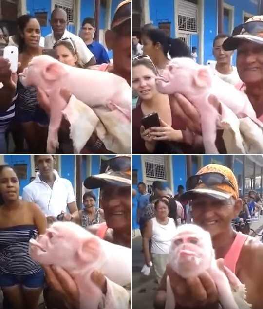 Porco-macaco assusta e vira atração em pequena cidade cubana | Reprodução/YouTube(super canal vine)