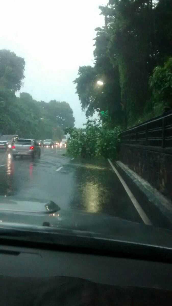 Árvore caiu próximo a delegacia da mulher no Eldorado- Imagem via Whatsapp