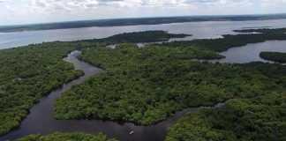 Saiba por quais países passa o Rio Amazonas / Foto: depositphotos