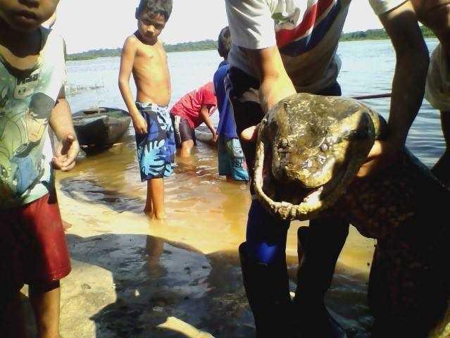 Foto da cobra gigante na comunidade de Mirití no Amazonas, real ou ficção?