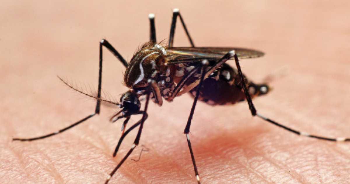 Estudo afirma que é possível se infectar com Zika, Dengue e Chicungunha ao mesmo tempo - Imagem de divulgação