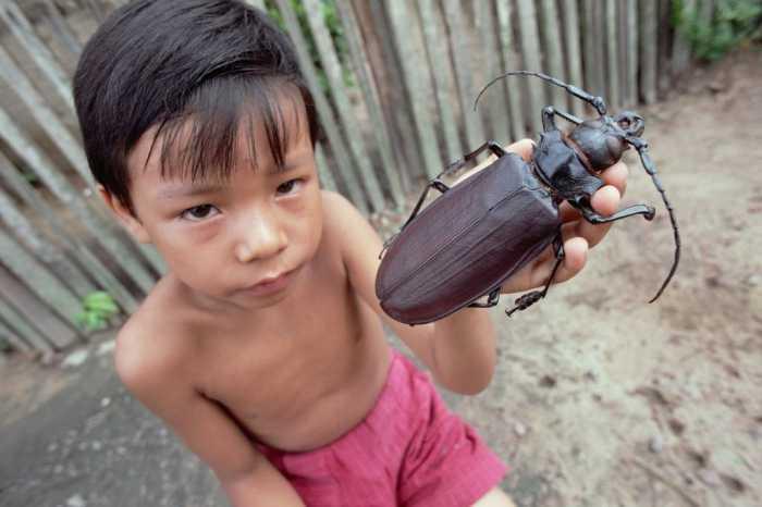 Criança com um com o cerambicídeo-gigante / Reprodução da Internet