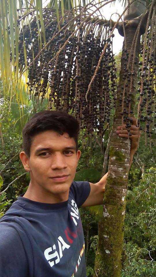 Caboclo Raiz : Em Barcelos jovem posta selfie em açaízeiro há mais de 25 metros de altura! / Reprodução Facebook