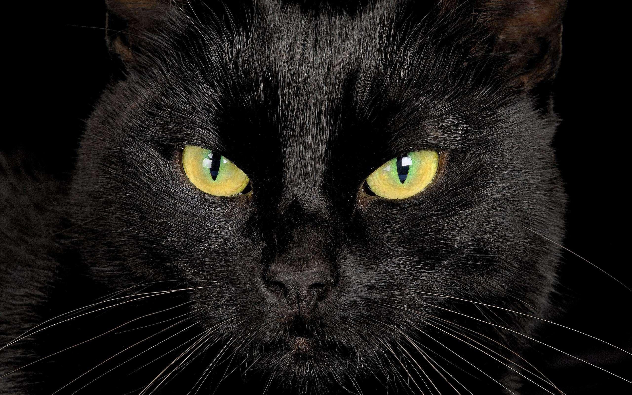 Ver gato preto na sexta-feira 13, dá azar;