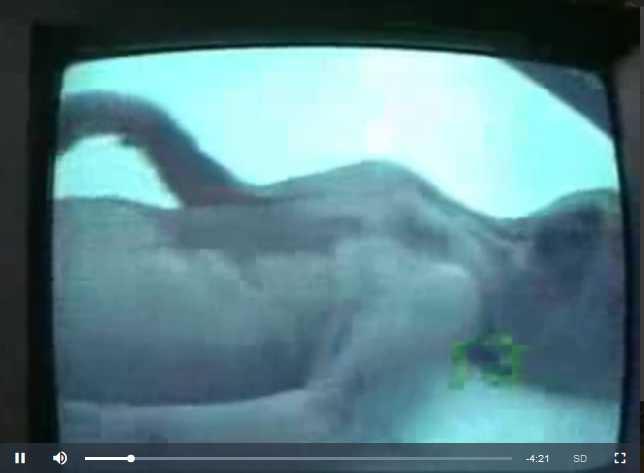 Relembre em vídeo o curioso caso do filhote de Mapinguari encontrado em Manaus