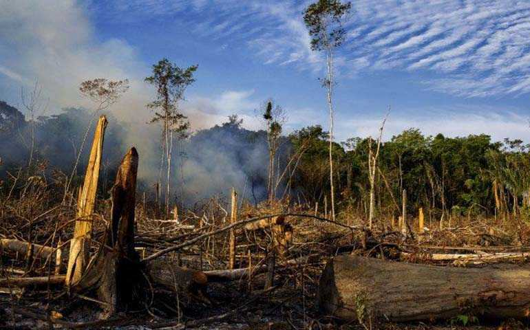 Programa de combate ao desmatamento chega em mais dois municípios do Amazonas / Divulgação