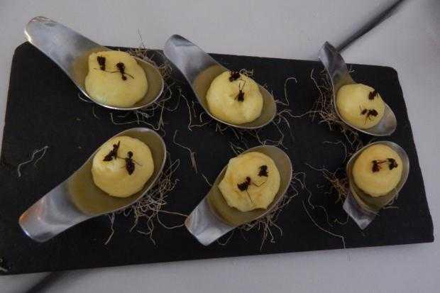 Formiga saúva com espuma de mandioquinha é uma das entradas (R$ 16 a unidade) do restaurante Banzeiro / Divulgação