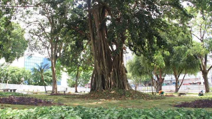 Arborização histórica da Matriz ganha reforço / Divulgação