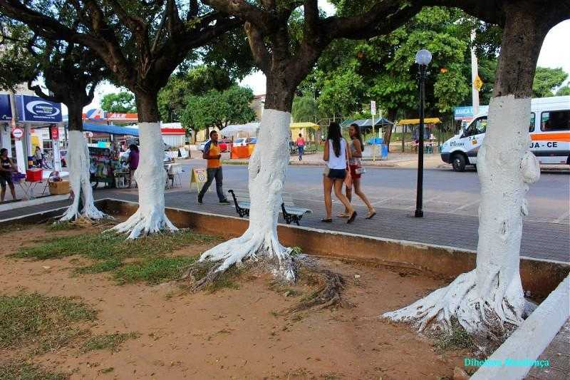 árvores pintadas com cal /Foto: Reprodução