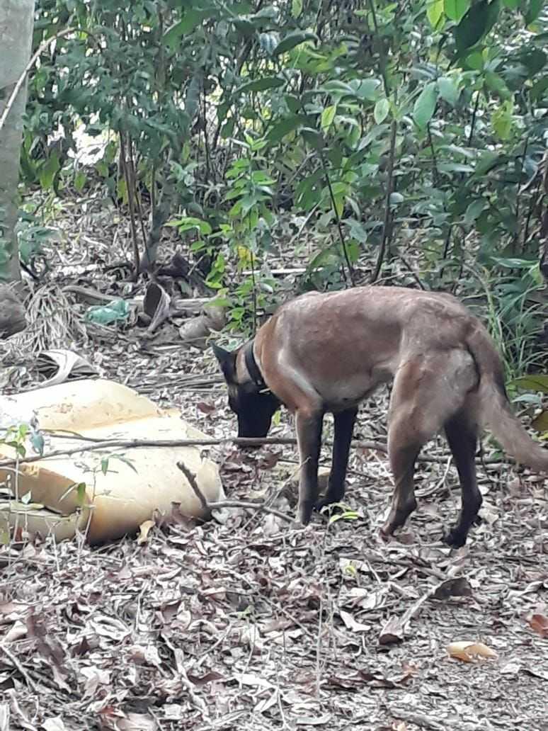 Corpo enterrado de cabeça para baixo e achado por cadela da CIPCÃES - Imagem: Divulgação/PM