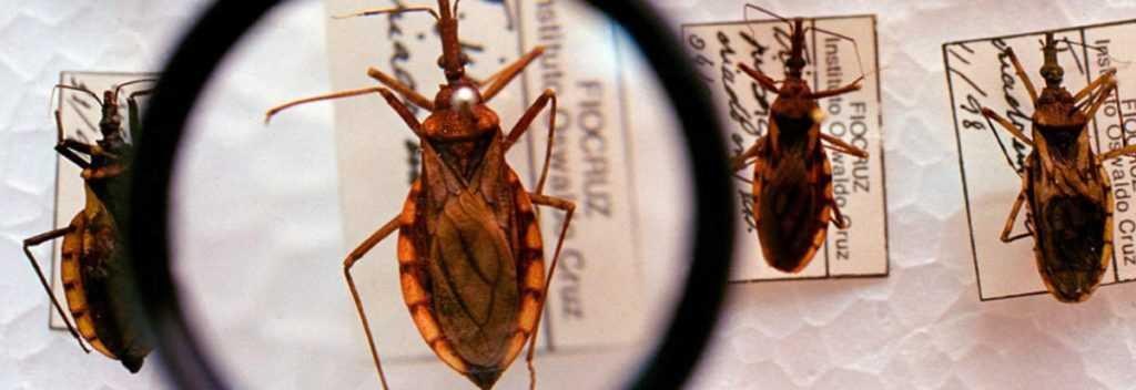 Amazonas confirma três casos de doença de chagas no estado - Imagem: Divulgação