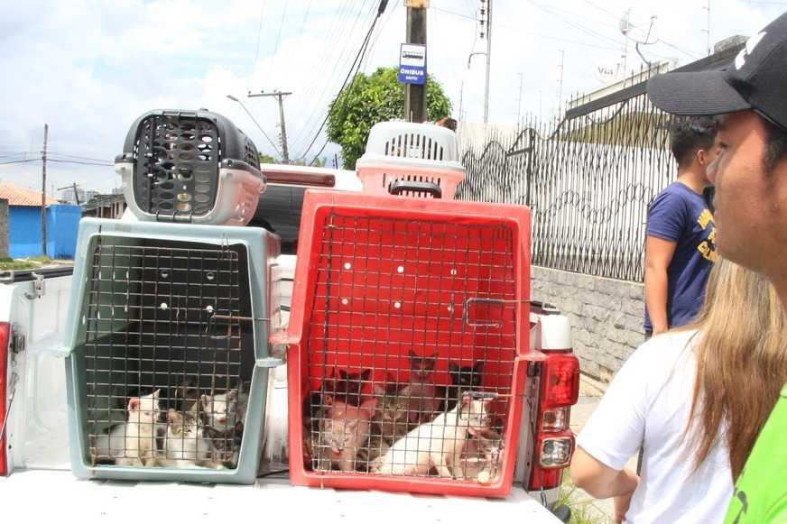 Após denuncia, idosa é despejada de casa com 60 gatos em Manaus - Imagem: Divulgação/ONG Pata