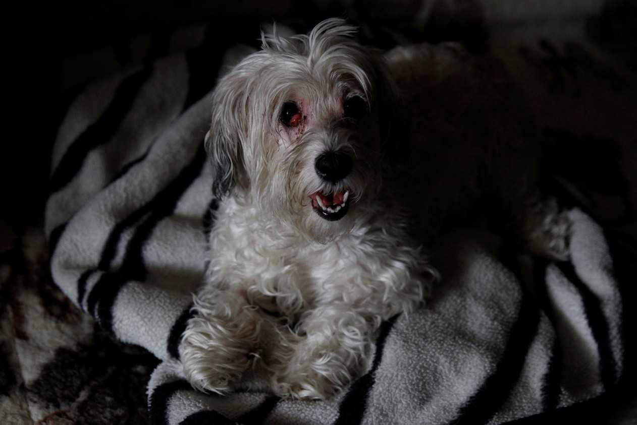 A cachorrinha ZsaZsa -Imagem: Bernadett Szabo/Reuters