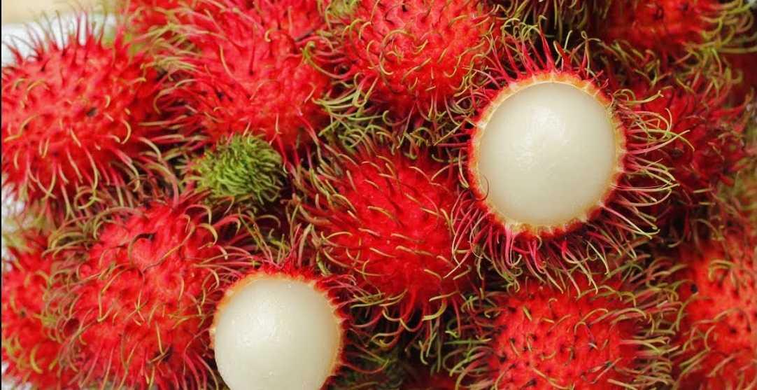 Conheça 13 benefícios do Rambutan para saúde - Imagem: Divulgação
