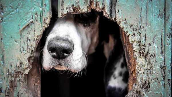 Menino se esconde em casa de cachorro e se salva em tiroteio - Imagem: Divulgação