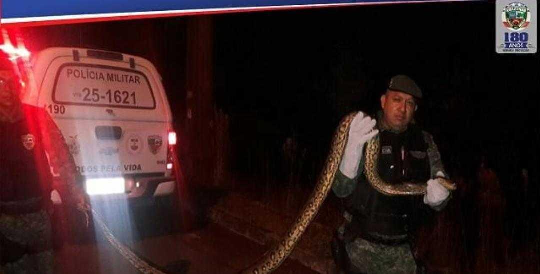 Cobra sucuri de quatro metros é resgatada no bairro São José I na zona leste de Manaus
