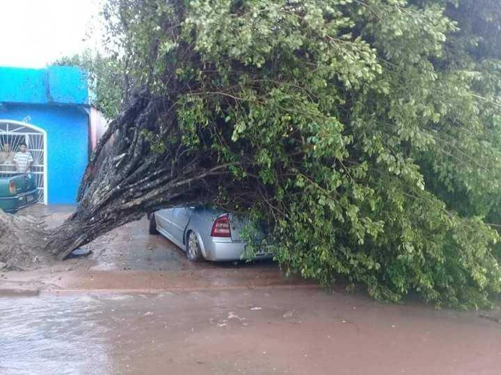 Árvore cai e destrói veículo em Itacoatiara, no Amazonas - Imagem: Via Whatsapp